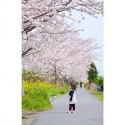 Sakura to Nanohana