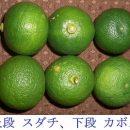 onsudachiunderkabosu